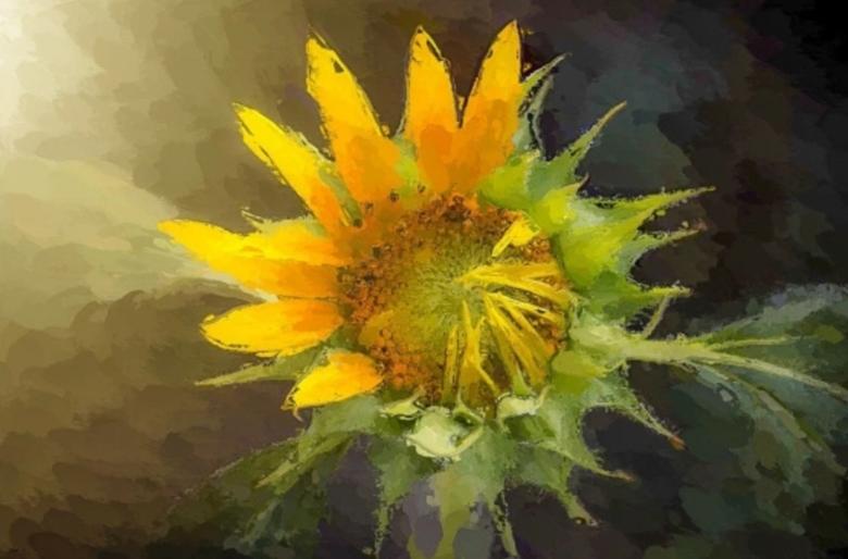 Yellow Cone Flower